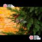 Ель Сказочная с шишками (литые веточки) от 2,5м -6м